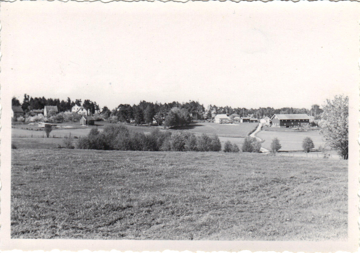 Grålum. Hygga mot venstre utenfor bildet. Foto: Asbjørn Bjørnstad