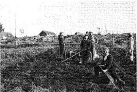 Potetopptaking under krigen