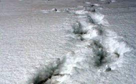 Spor i snøen - hvem har gått her?